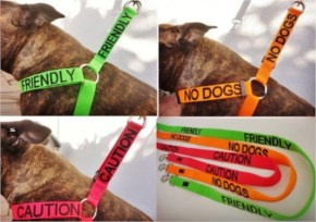 An amazing idea for dog owners