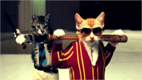 Animal Funny Mafia Cat Wedding Pictures