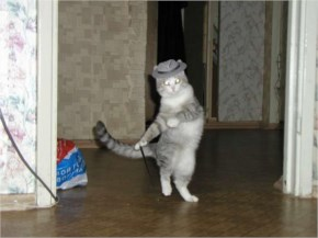As steve watched his cat tap dance across the floor, he realised he should stop drinking