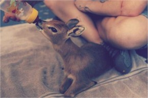 Baby steenbok, a kind of antelope