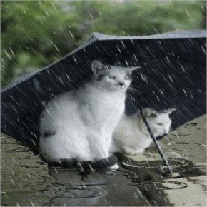Barish image-Cats enjoy rainy season