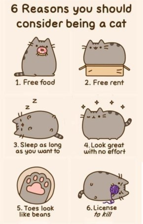 Benefits of being a cat!!