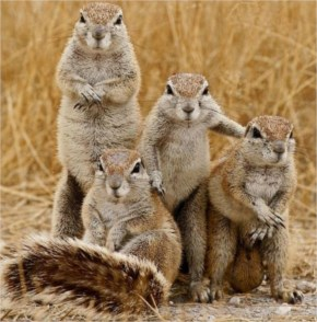 Best Fighting Squirrels Family Photo Is One Of Our Fun And Funny Pictures Collections