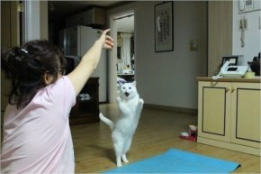 Cat Learning To Dance