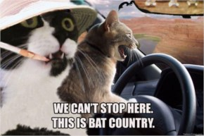 Cat Meme Fear And Loathing In Las Vegas Cats Bat Country