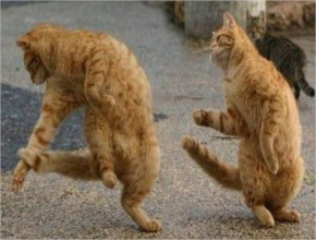Cats Dancing Funny Picture