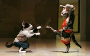 Cats Fighting …Funny Cat Looks So Funny In The Wedding Dress