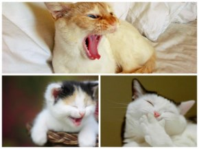 Cats with their cute smile