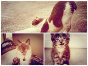 Part -1: Funny Cats Collection