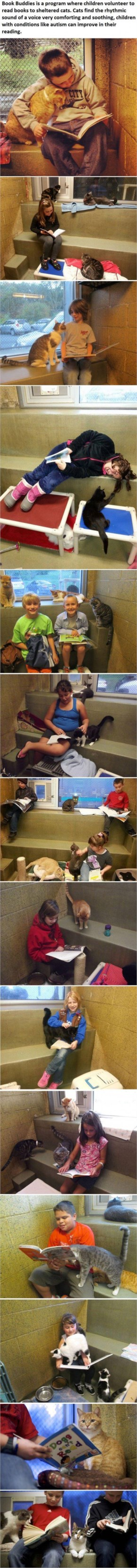 Children read to shelter cats