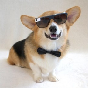 Chompers the Corgi is giving James Bond a run for his money!