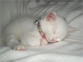 Cute Adorable Cat Kitten Sleeping