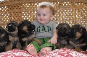 Cute and Awesome Puppies - Extremely Cuteness