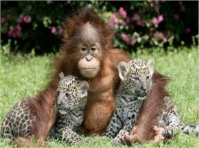 """Cute Animals - Monkey And Cheetahs....Funny """"Fowl"""" Pictures"""