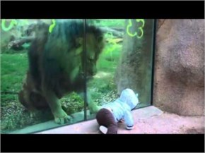 Cute Baby teasing the Lion