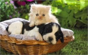 Cute Cat And Puppy Playing together