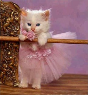 cute cat are wearing pink dress  and dancing