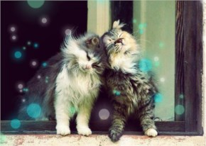 Cute Cat couple
