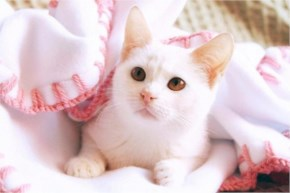cute cat fun with towel
