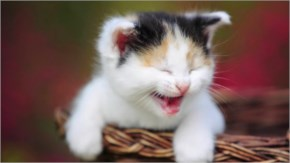 Cute Cat Happy