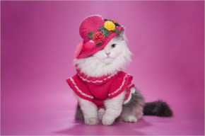 Cute Cat image-in pink dress and hat