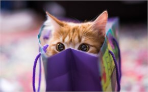 Cute Cat image-like gift