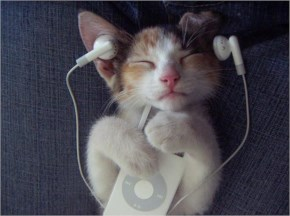 Cute Cat image-Listening  music