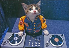 Cute Cat image- look like DJ kitty