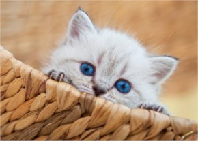 Cute Cat image- Thinking