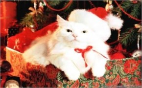 Cute Cat image with Christmas Cat