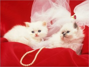 Cute Cat image with cute coupel