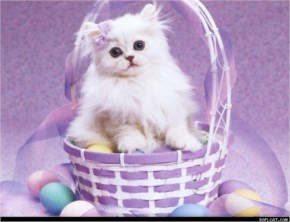 Cute Cat image with purple basket