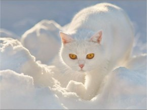 Cute Cat image with snow