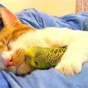 Cute Cat image with Surprising Sleeping buddies
