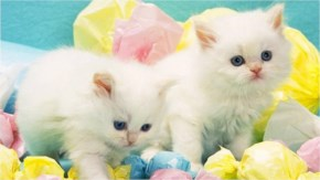 Cute Cat kitten image- Fun with together