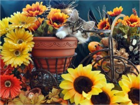 Cute Cat kitten image- in Bicycle Flower