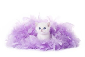 Cute Cat kitten image-look like British princes with purple plumb