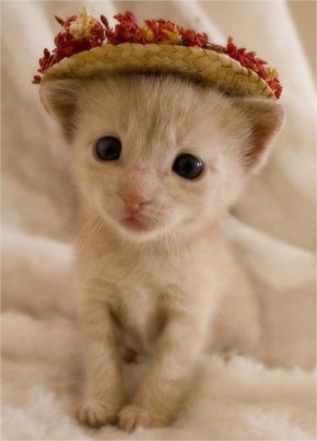 Cute Cat kitten image-Wearing hat