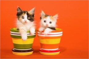 Cute Cat kitten- In Rainbow color port