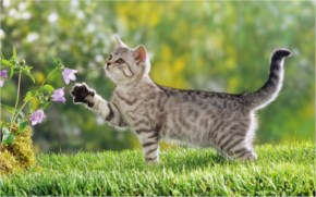 Cute Cat look at Flower and Touch it