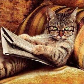 Cute Cat-Reading news paper