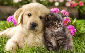 Cute cat with Cute Puppy - Friendship