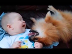 Cute Cats and Dogs Love Babies Compilation 2015 - Dogs 2015 - Cats 2015