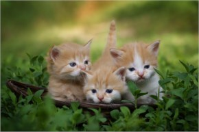 Cute Cats Triplets Picture