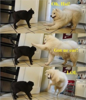 Cute Dog Playing With A Cat Is One Of Our Fun And Funny Pictures