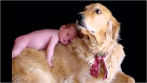 Cute Dog with Adorable Babie