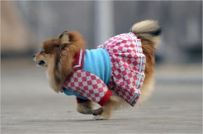 Cute & Funny Dressed Up Dogs Photos