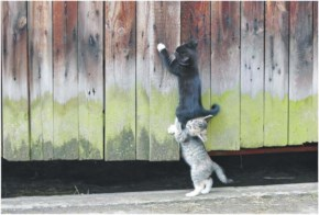 Cute Funny Two Cats Action Pictur
