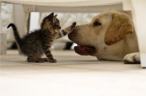 Cute Kitten and Dog Playing