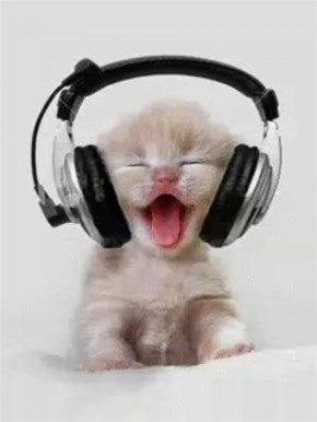 cute kitten listening music in head phone